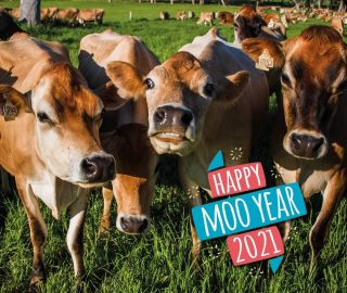 Wishing all our Fleurieu Family a Happy New Year! Here's to hopefully what will be a fantastic year ahead 🙌🐮Don't forget that if your local supermarket was closed today, you can always grab your Fleurieu Milk from @xconvenience stores across SA 24 hours a day, 7 days a week. Otherwise, check out our new and improved stockist listing on our website.