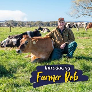 Meet Rob and beautiful Swirl the Jersey. Rob is a lifelong dairy farmer and has been milking cows since he could stand in the dairy. He loves to grow grass and breed cows and has never been able to see himself doing anything else. You may not know that Rob is a Kiwi, which we don't hold against him 😉 as he's a Myponga local now!